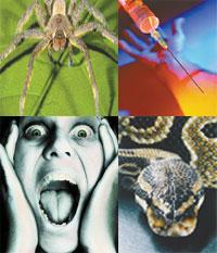 aracnofobia, acrofobia, , fobia,  como  curar las fobias